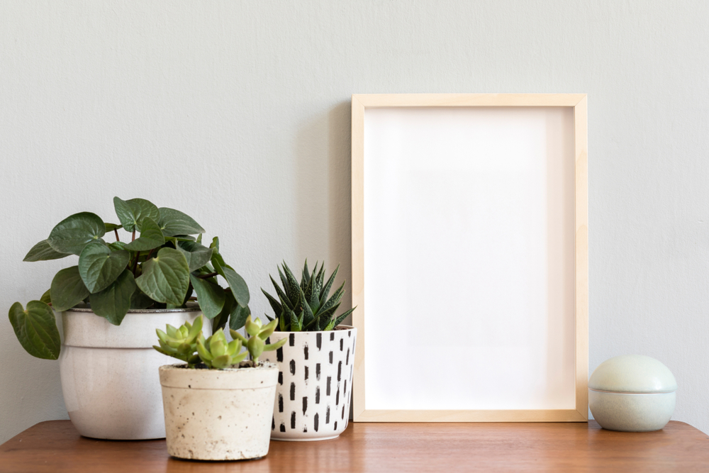 three plants and picture frame sitting on a table pressed against the wall
